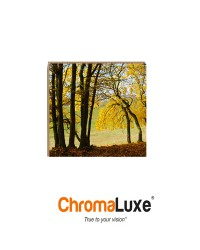 U4528 - ChromaLuxe 8x8 Maple Natural Wood- Matte Clear